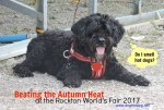 Dog at Rockton World's Fair 2017 dogtrotting.net