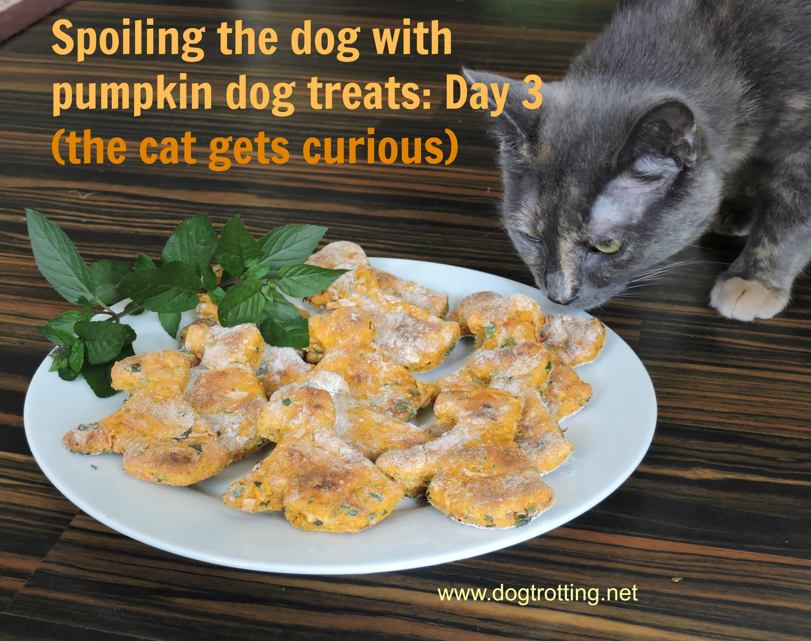 cat sniffing dog pumpkin and mint cookies