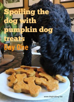dog eating pumpkin cookies