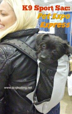 dog in K9 sport sac doggie backpack