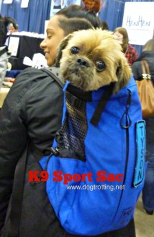 dog in K9 sport sac doggie backpack
