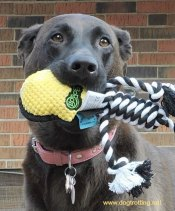 dog with dog toy