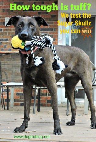 Dog with GoDog toy