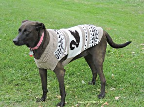 Dog wearing Chilly dog sweater dogtrotting.net