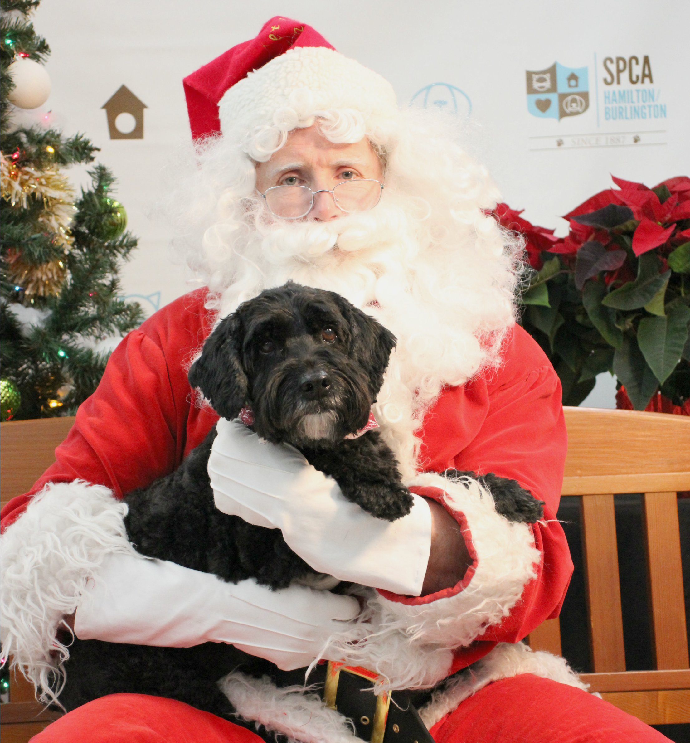 dog with santa spca dogtrotting.net