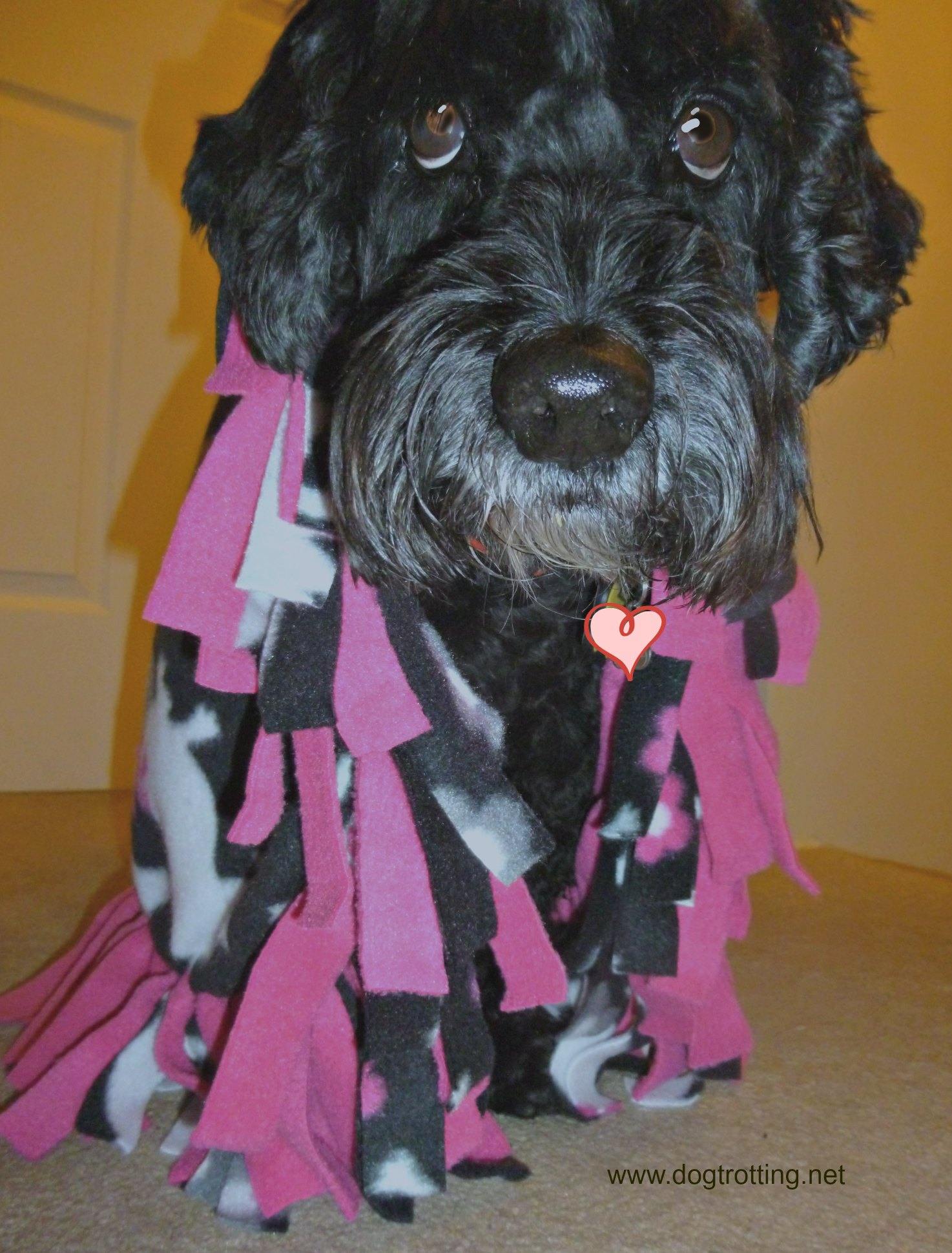 dog and DIY Fleece dog blanket project