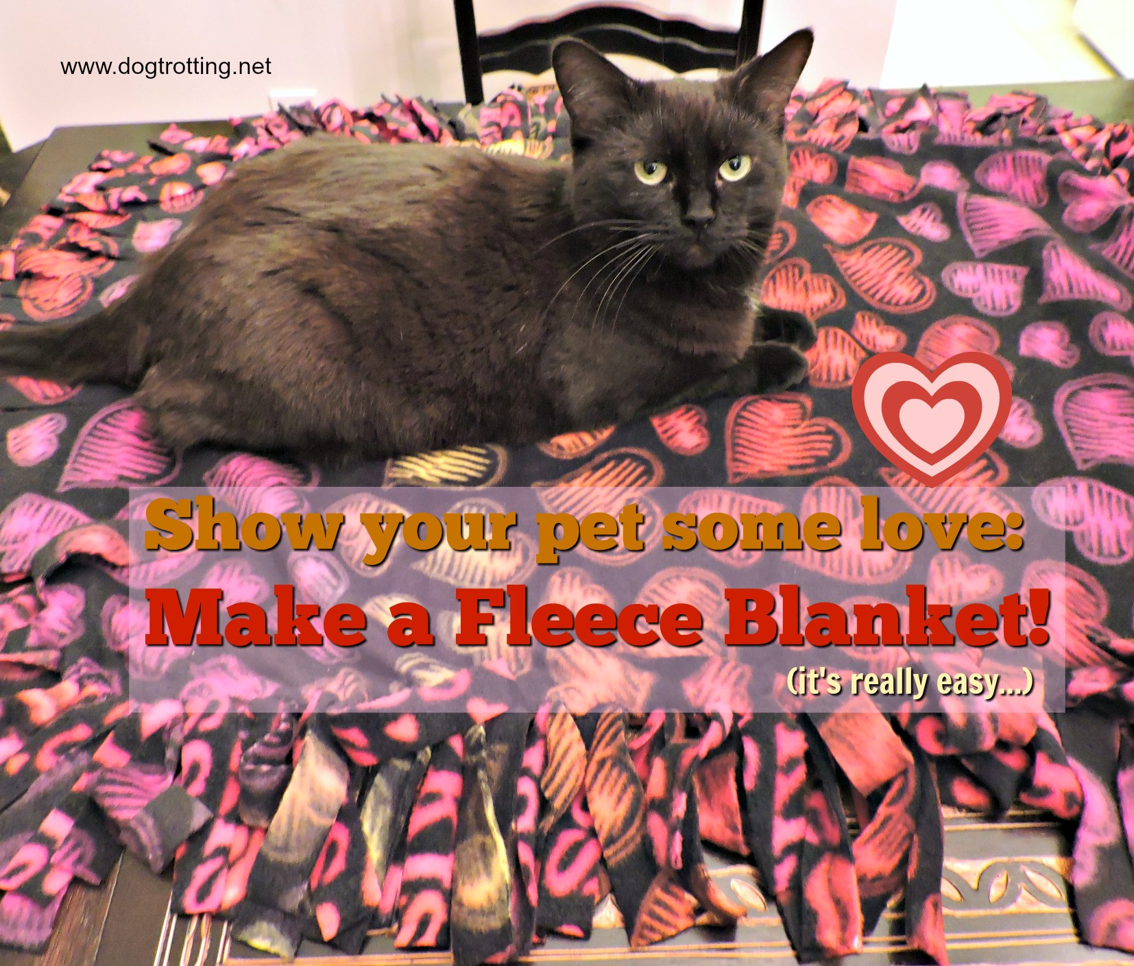 DIY: Make your dog a fleece blanket … or win one instead! (contest)