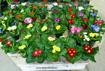 flowers at Dog Day on Family Day at Terra Greenhouses, Ontario
