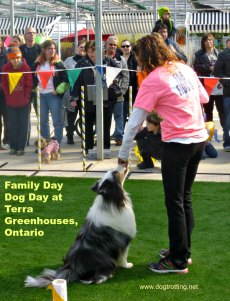 dog performing at Dog Day on Family Day at Terra Greenhouses, Ontario