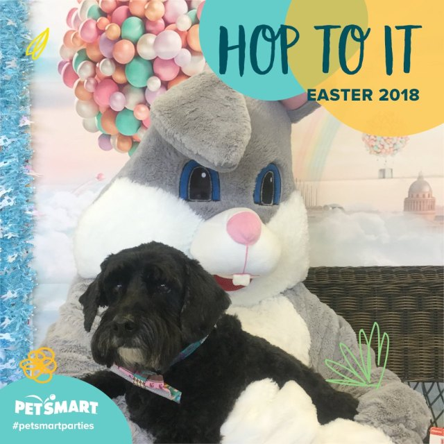 dog with Easter Bunny at PetsMart