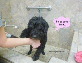 dog getting washed in self bath