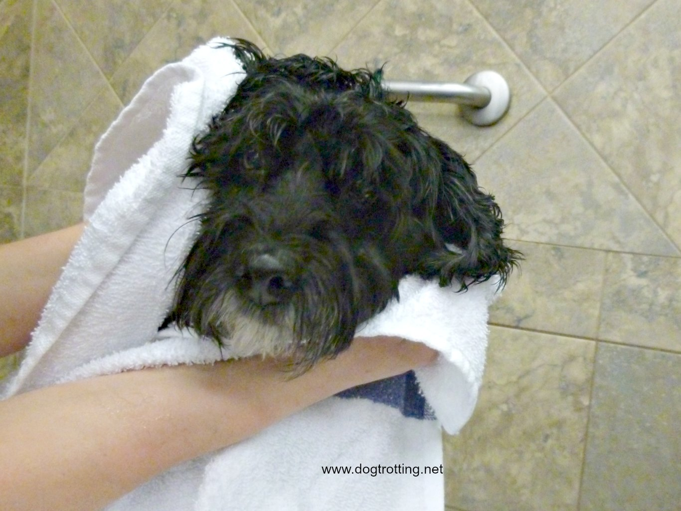 Dog Grooming: Get the tools. Eazee Brush Review
