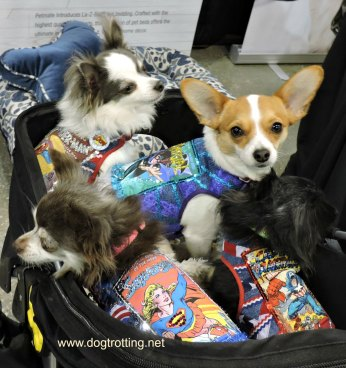 blogpaws 2018 4