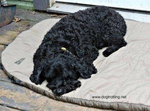 dog sleeping bag 1