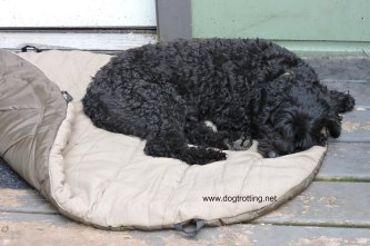 dog sleeping bag 3