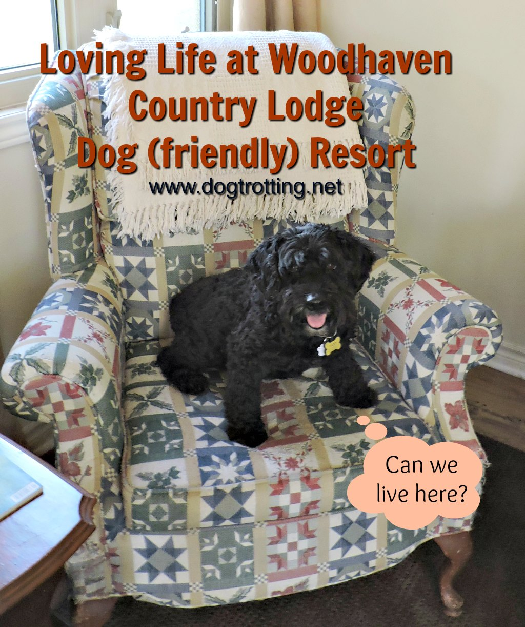 Letting Loose: Dog Days of Summer (almost) at Woodhaven Country Lodge