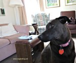 brown dog inside cottage by pink couch