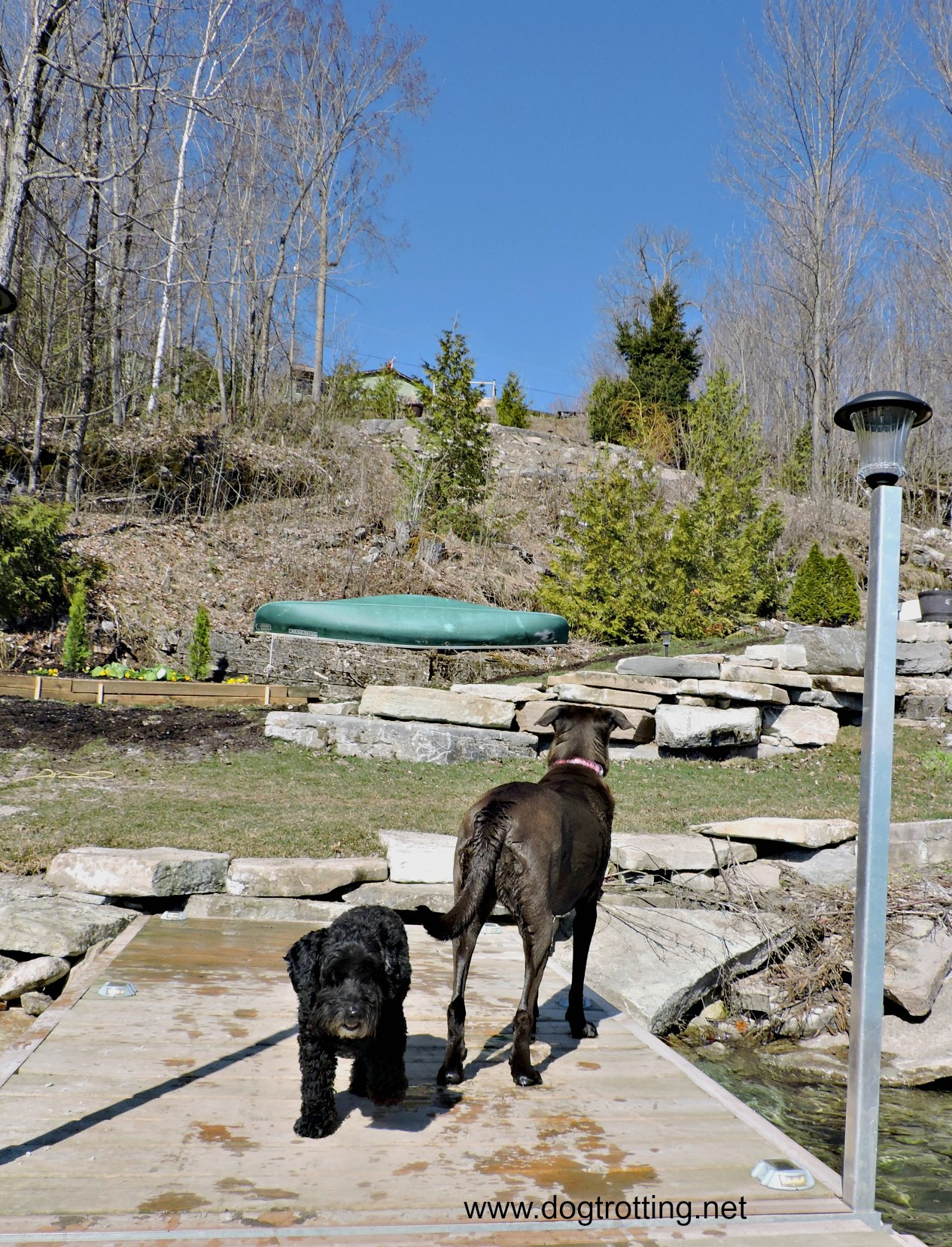little black dog and big brown dog on dock near lake