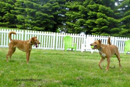 woofstock leash free 2