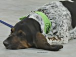 dog laying down at Dogs 4 Youth pet event, Grimsby, Ontario