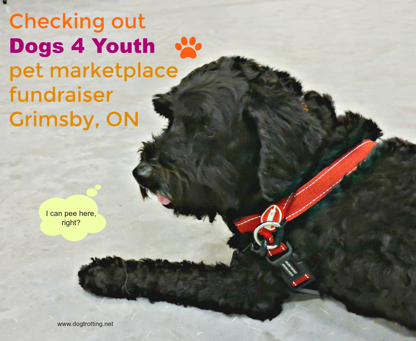 black dog at Dogs 4 Youth pet event, Grimsby, Ontario