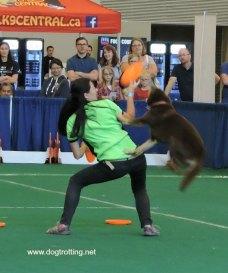 frisbee dog 1