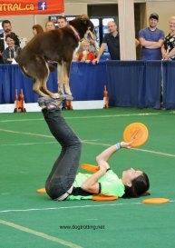 frisbee dog 2