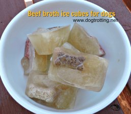 beef broth dog ice cubes dogtrotting