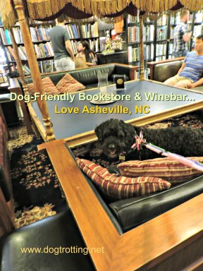Travel Asheville, NC: Books, Wine and Dogs… what could go