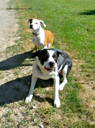buster and tess