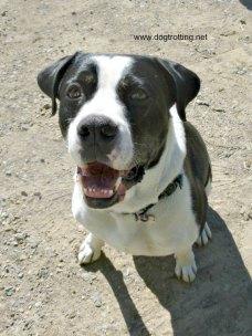 Dog Events 2019 CANADA | Dog Trotting