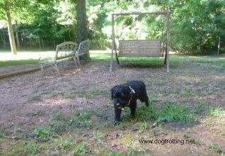dog camping main dog park
