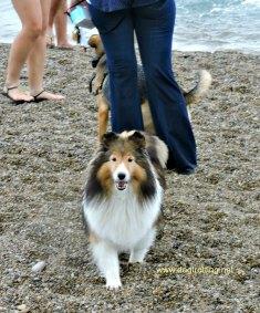 doggie paddle 3