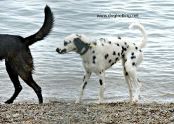 doggie paddle 4