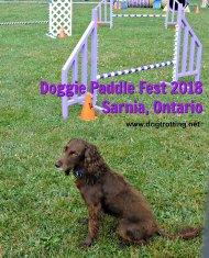 doggie paddle 5