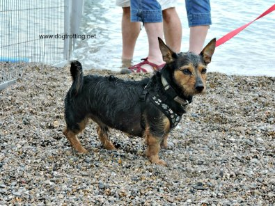 doggie paddle 6