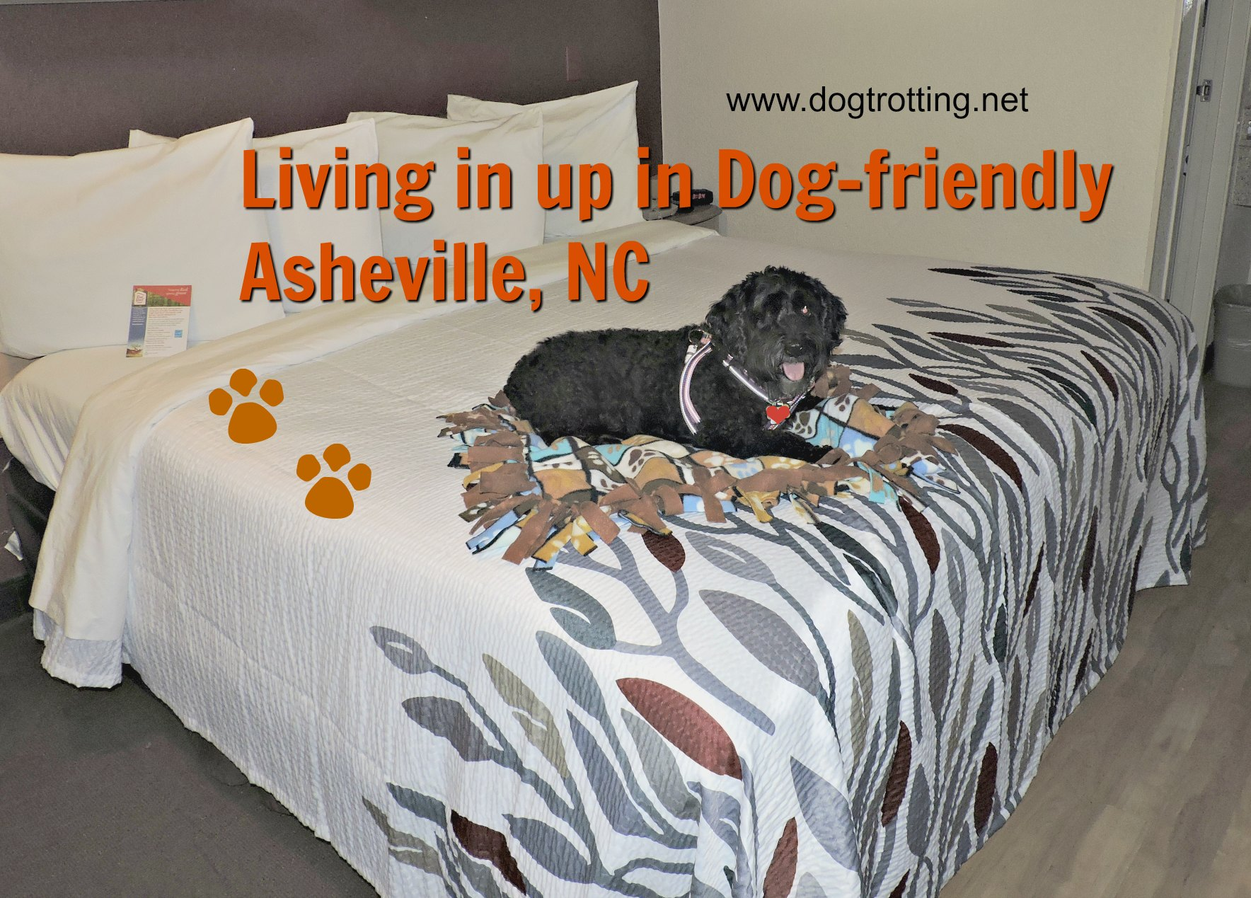 Travel Asheville, NC: Check out the most dog friendly city we've found yet (Day 4).