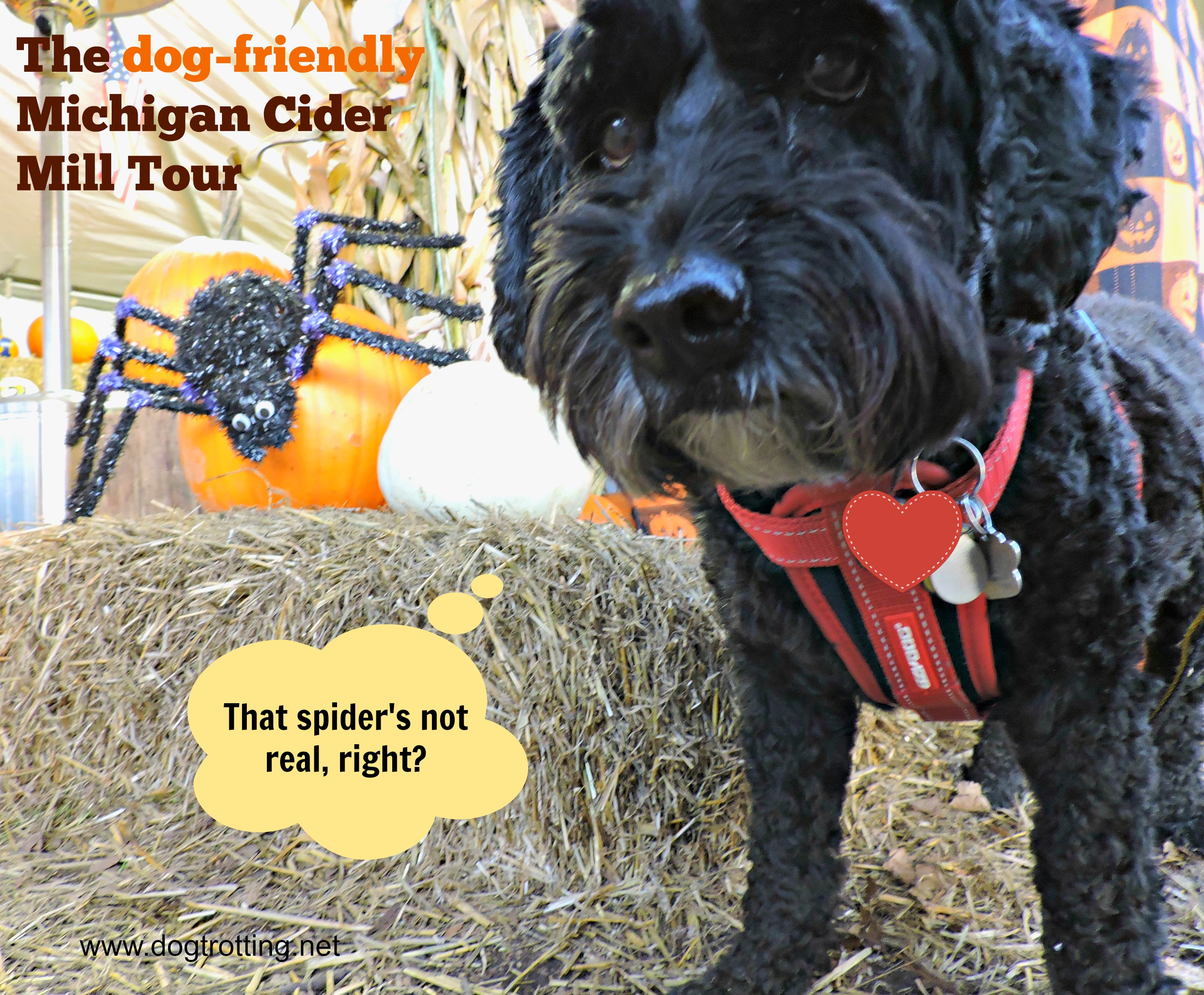 Travel Rochester, MI: Dog-friendly Cider Mills Here We Come