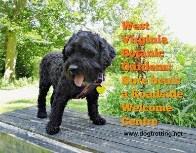 Dog at West Virginia Botanic Gardens