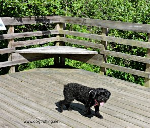 Dog on boardwalk at West Virginia Botanic Gardens