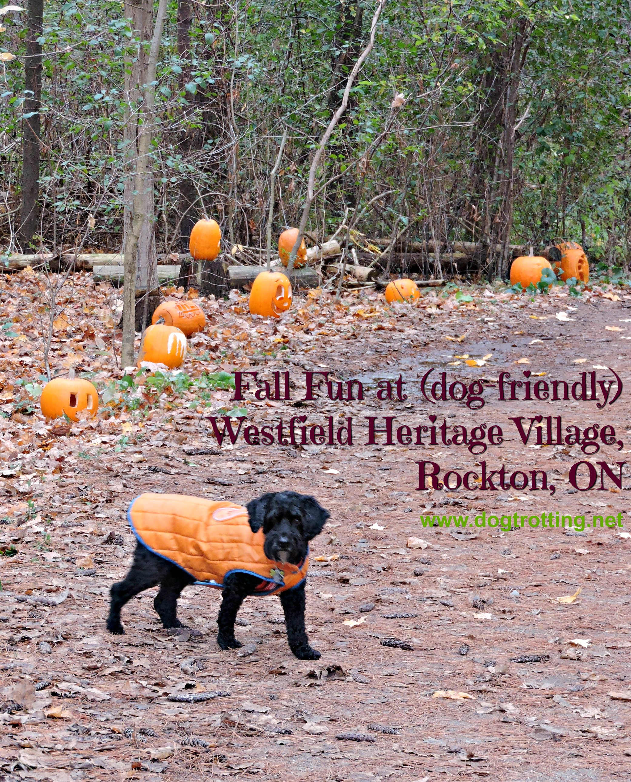 Travel Rockton, ON: Westfield Heritage Village … bring the dog (and a snack)