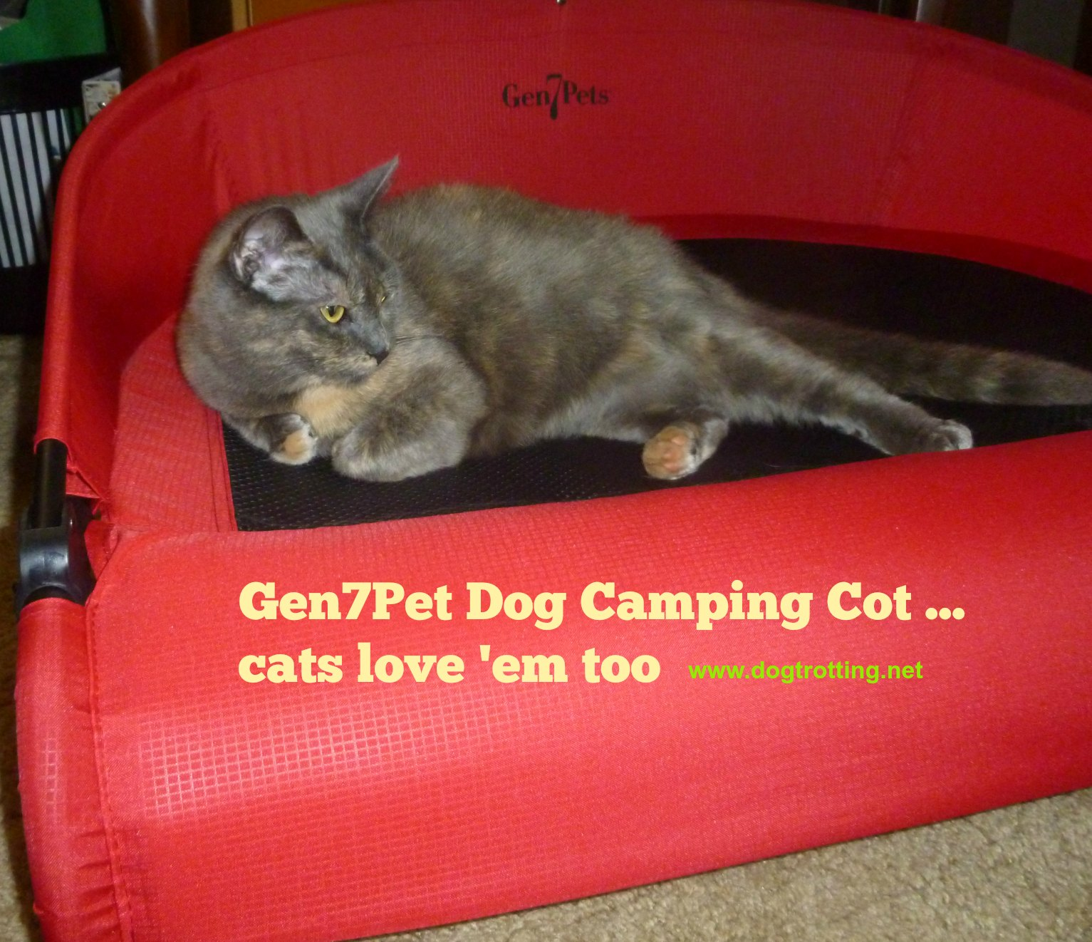 Review: Cat Claims Gen 7 Pets Cool-Air Dog Cot. Dog watches.