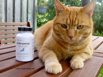cat with arthramine joint supplements for dogs