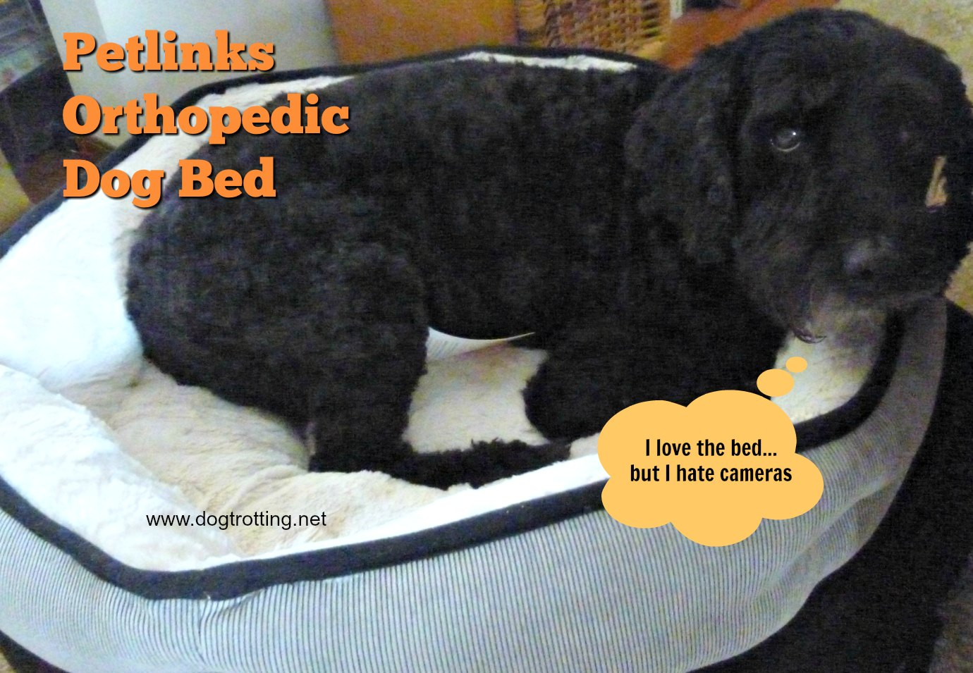 dog in orthopedic dog bed www.dogtrottting.net