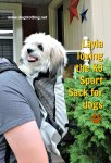 dog in K9 Sport Sack review on dogtrotting.net