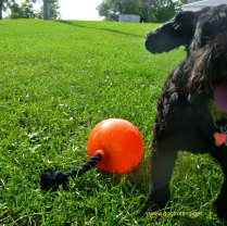 dog with K9 fitness for Zeus dog toys review and give-away