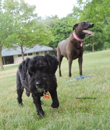 dogs with K9 fitness for Zeus dog toys review and give-away
