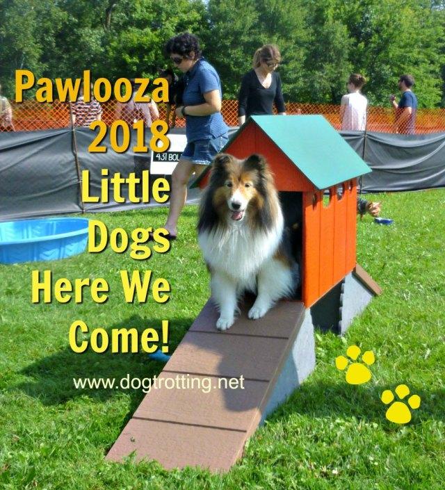dog at Pawlooza 2018 pet festival
