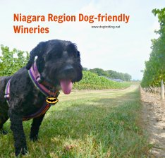dog at niagara winery