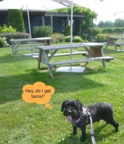 dog at Thirty Bench Winery Niagara